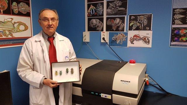 Ugrdivulga Las Imágenes En 3D De Escarabajos Obtenidas Por Un Científico De La U