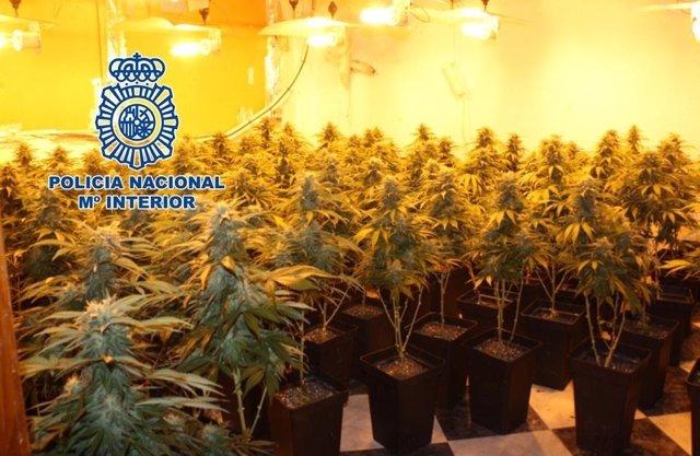 Nota De Prensa: La Policía Nacional Realiza Una Operación Contra Los Cortes De L