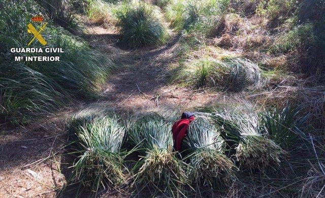 Plantas cortadas en una área protegida