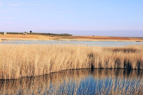 Laguna del Taray