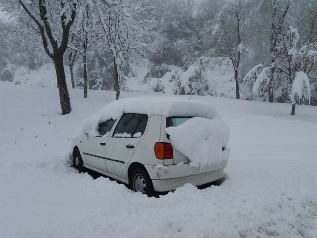 Mas Nieve