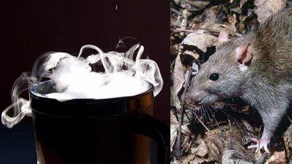 La empresa murciana 'muyFrio' comercializa un sistema innovador para eliminar insectos y ratas con hielo seco