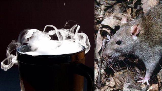 Hielo seco contra las ratas