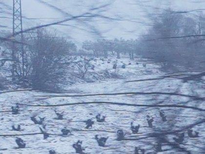 La nieve complica la circulación en varias carreteras de la provincia de Huesca