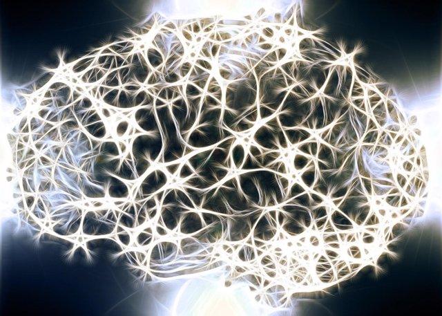 Cerebro, conexiones cerebrales