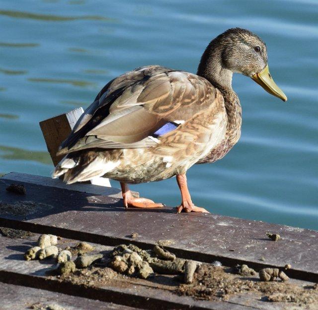 Un ave acuática