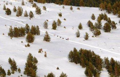 La Soria Al Límite, nueva prueba de trineo con perros, recorrerá toda la zona de la Sierra de Urbión