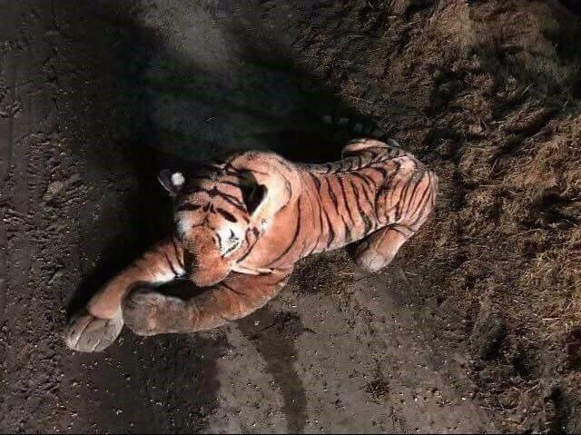 Tigre de peluche mantuvo en vilo a la policía de Escocia durante 45 minuots