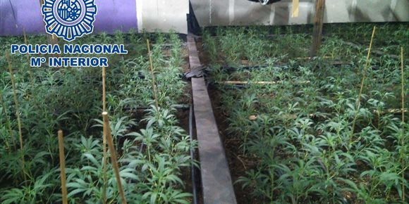 9. Detenidos seis chinos que cultivaban más de 1.600 plantas de marihuana en un invernadero de Leganés