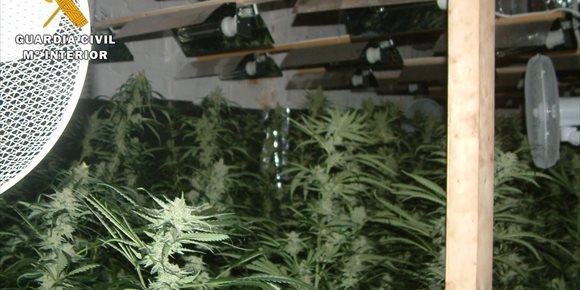 6. Desmantelada en Aguilar (Córdoba) una plantación de marihuana tipo 'indoor' de alto rendimiento
