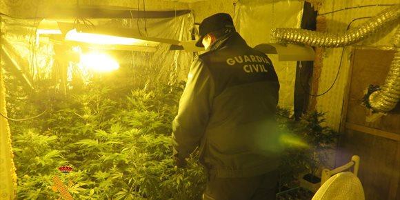 1. Desmanteladas en Navacarros (Salamanca) tres instalaciones de cultivo de marihuana