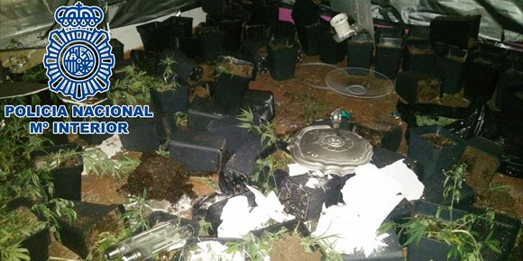 4. Un detenido y desmantelada una plantación de marihuana en una vivienda ocupada de Jerez