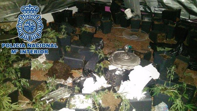 Plantación de marihuana en Jerez de la Frontera