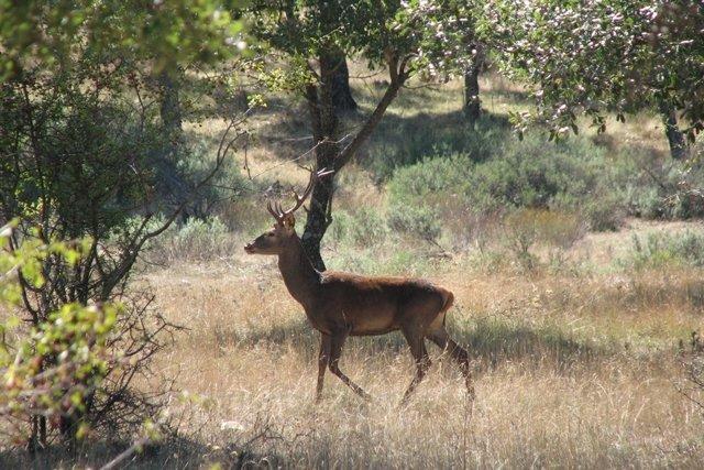 Ciervo, caza, cazadores, naturaleza, animales