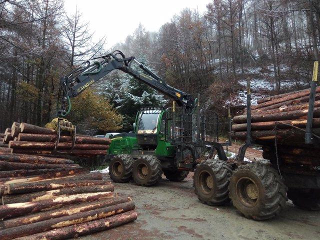 Extracción de madera en Navarra