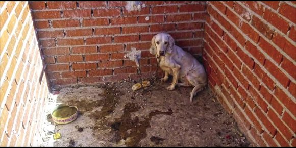 8. Juzgan este miércoles a un cazador por presunto maltrato a 55 perros en su finca de Villa del Prado