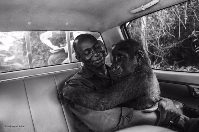 Fotografía ganadora del Wildlife Photographer of the Year 2017-2018