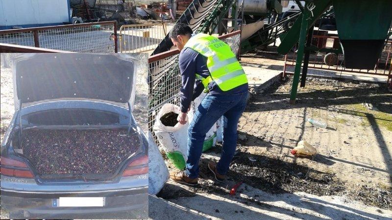 Nueve investigados por el robo de ocho toneladas de aceitunas en la comarca de Montánchez