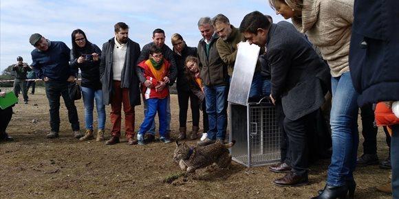6. Suelta de dos linces en Vilches para repoblar la comarca de Guarrizas