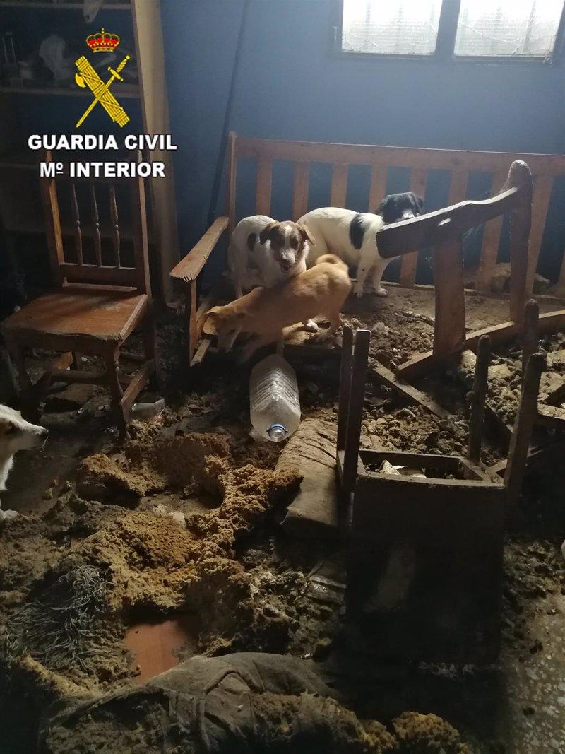 El Seprona rescata 19 perros en estado de abandono en Juan Grande (Gran Canaria)