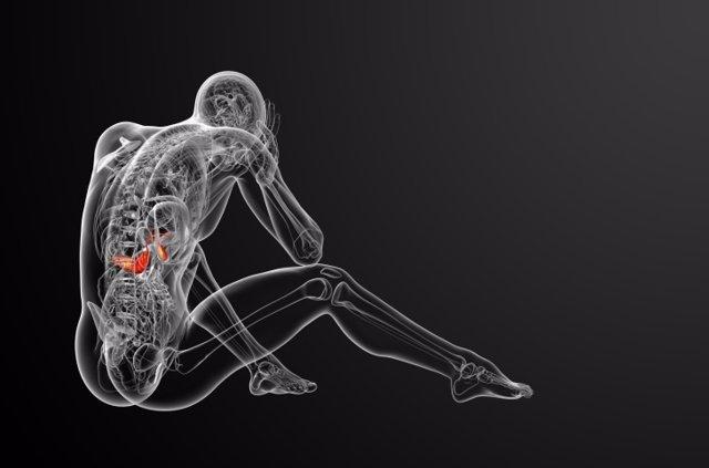 Páncreas, cuerpo humano