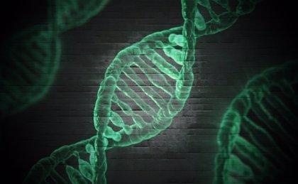 La expresión de los genes puede servir para determinar la hora de la muerte