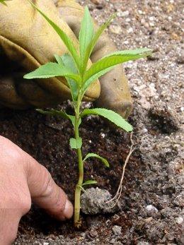 Jardinería-plantas