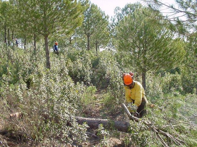 Trabajo de restauración forestal