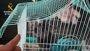 Investigadas en Málaga once personas por la venta ilegal de primates sin control sanitario