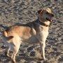 Foto: Condenan a 6 meses de cárcel a un hombre por tener atado a un perro durante ocho meses y luego abandonarlo