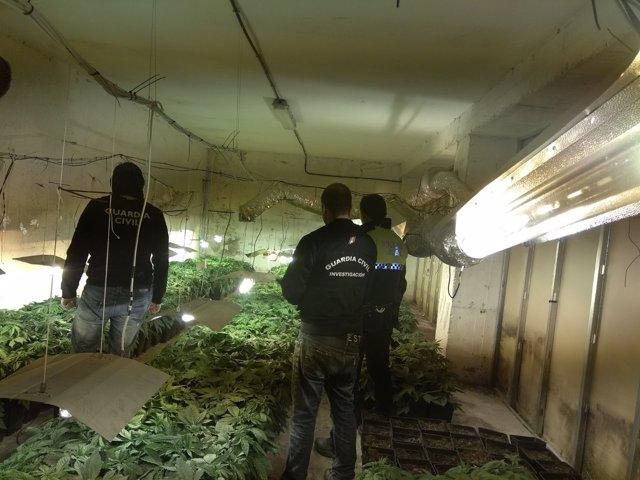 Plantaciones de marihuana descubiertas en la provincia