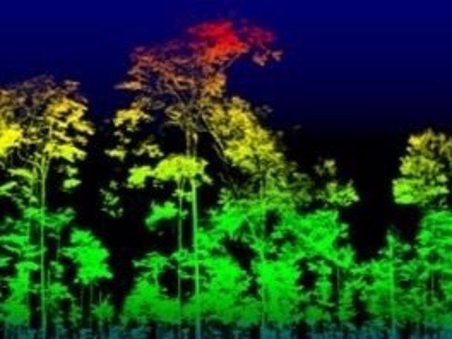 Medición de masa de un árbol con la nueva tecnología