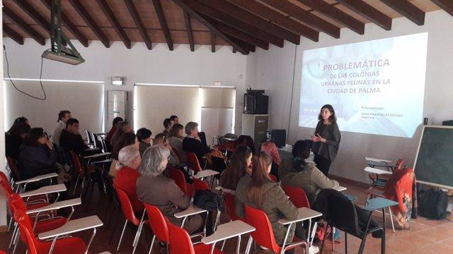 Voluntarios de las colonias felinas urbanas se reúnen con técnicos de Cort para hacer un seguimiento del programa