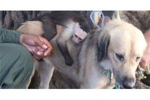 Una perra callejera adopta un mono y ambos se vuelven inseparables, en Colombia