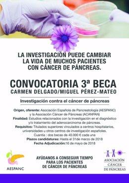 Becas de investigación en cáncer de páncreas