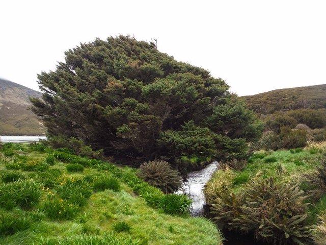 El árbol más solitario del mundo, señal de inicio del Antropoceno