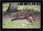 Hallan el cadáver de un lince ibérico en la A-4 a la altura de Almuradiel