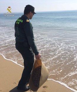 Agentes intervienen coquinas ilegales