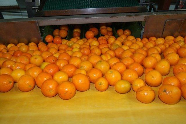 Naranjas de la Comunitat Valenciana