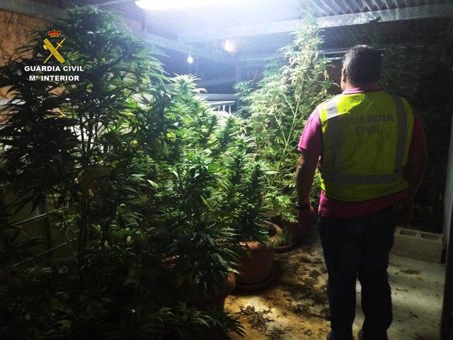 Un agente de la Guardia Civil tras una operación de intervención de marihuana