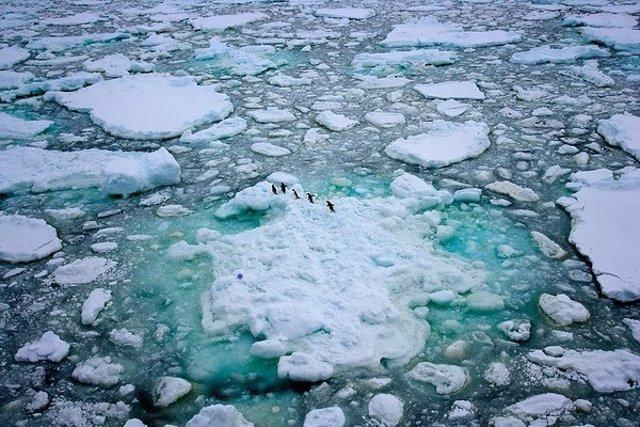 Greenpeace pide un Santuario Antártico tres veces el tamaño de España