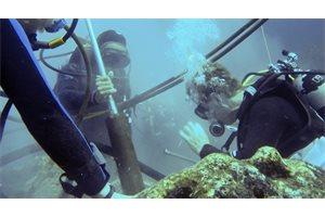 Sorprendente evidencia de calentamiento del mar en Islas Galápagos