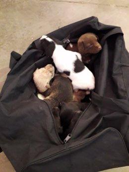 Cachorros encontrados en un contenedor de Islantilla, en Huelva.