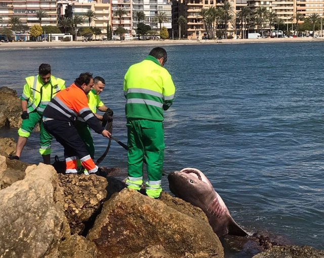 El animal en el momento de ser rescatado del mar