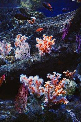 Nuevos corales