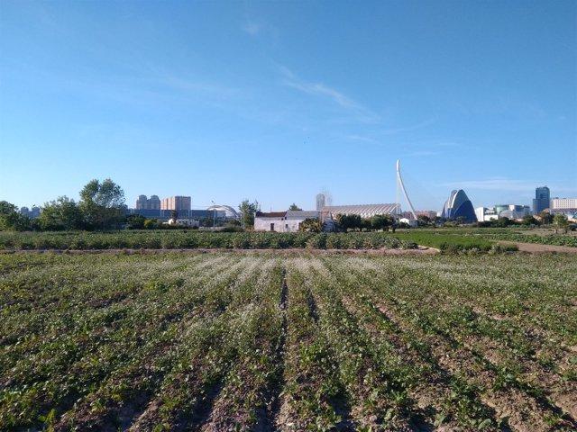 Huerta de València