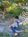 Foto: Detenido por pegar una paliza al perro que protegía la finca donde había ido a robar aguacates