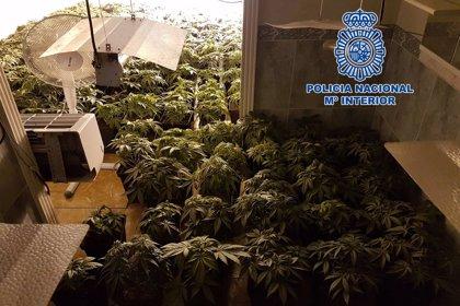 Intervenidas 221 plantas de marihuana en una casa ocupada de Almería en una operación con un detenido