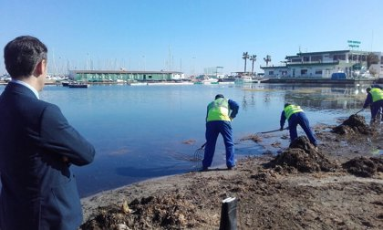 La Comunidad refuerza la brigada de limpieza del Mar Menor en marzo y prestará el servicio durante todo el año