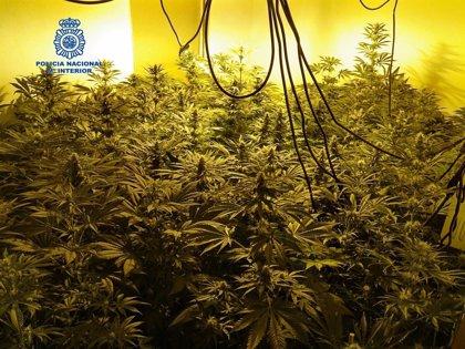 Desmantelan un punto de venta de marihuana en El Molinar y detienen al presunto responsable